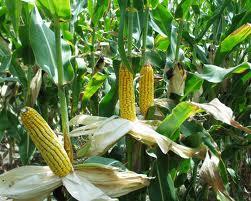 Photo of Potpore u poljoprivredi i ruralnom razvoju