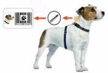 Photo of Obavijest o besplatnom mikročipiranju – označavanju pasa na području općine Luka